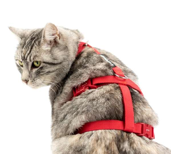 Top Katzengeschirr ausbruchsicher Safety Harness Classic rot