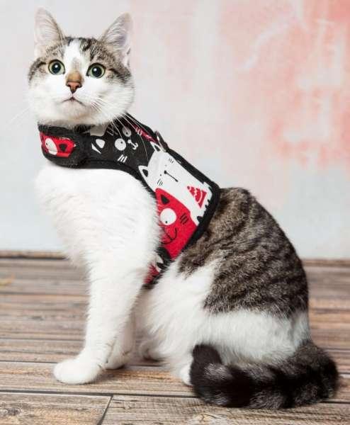 kattenharnas kattentuigje veilig vest luxe